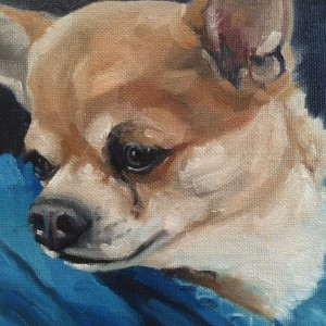 Hi Chihuahua. 6X6 in. Oils on canvas board