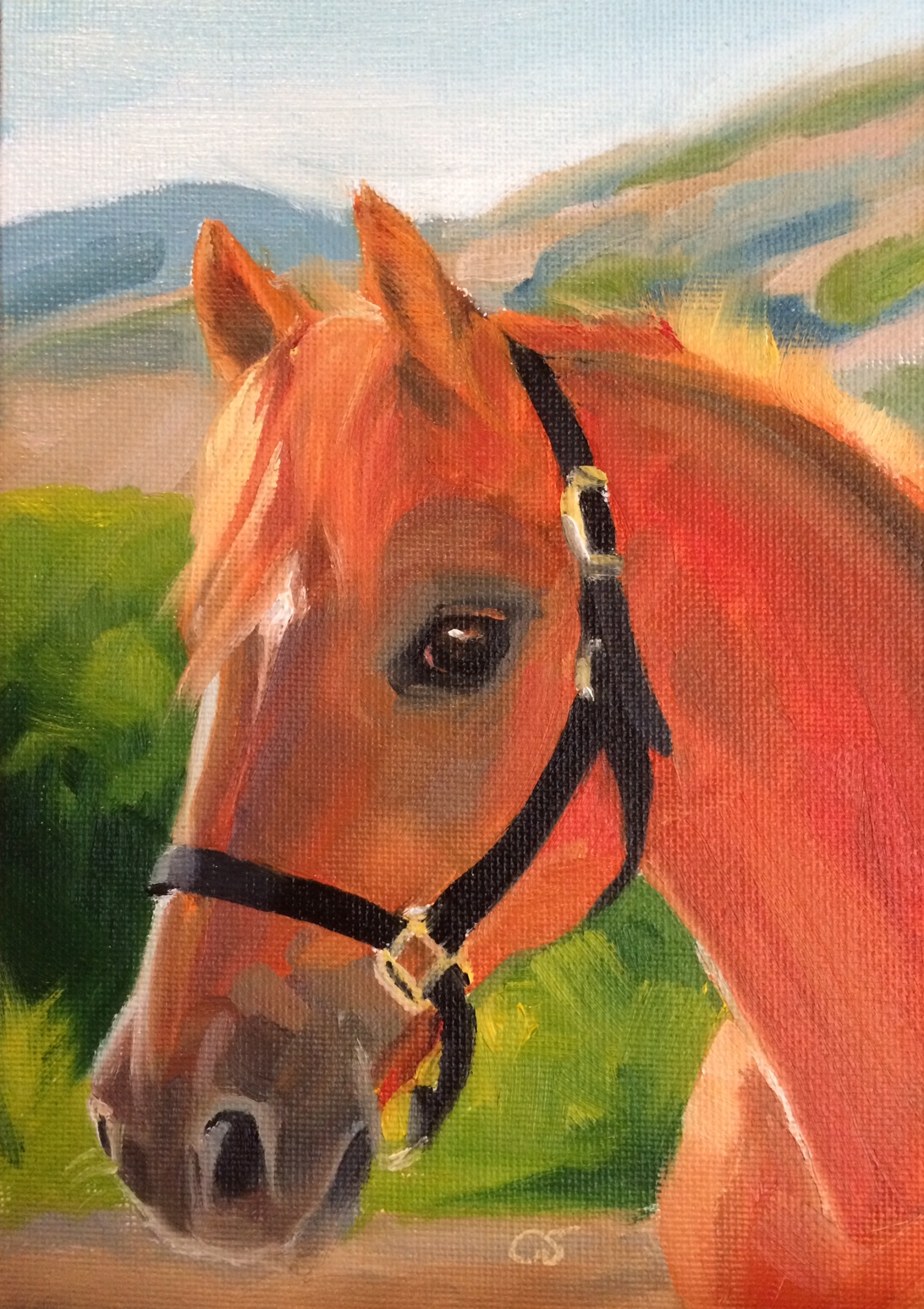 An Arabian horse from Cal Poly